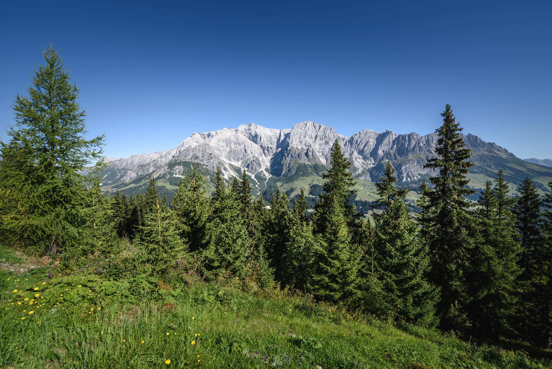 Wald mit Bergen